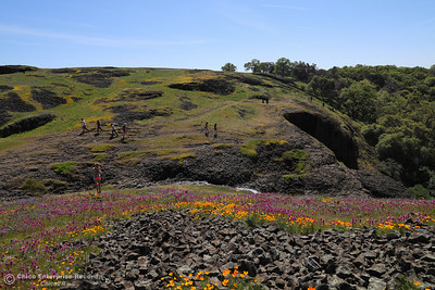 Wild flowers flourish at Table Mountain, April 1, 2018, in Oroville, California. (Carin Dorghalli -- Enterprise-Record)