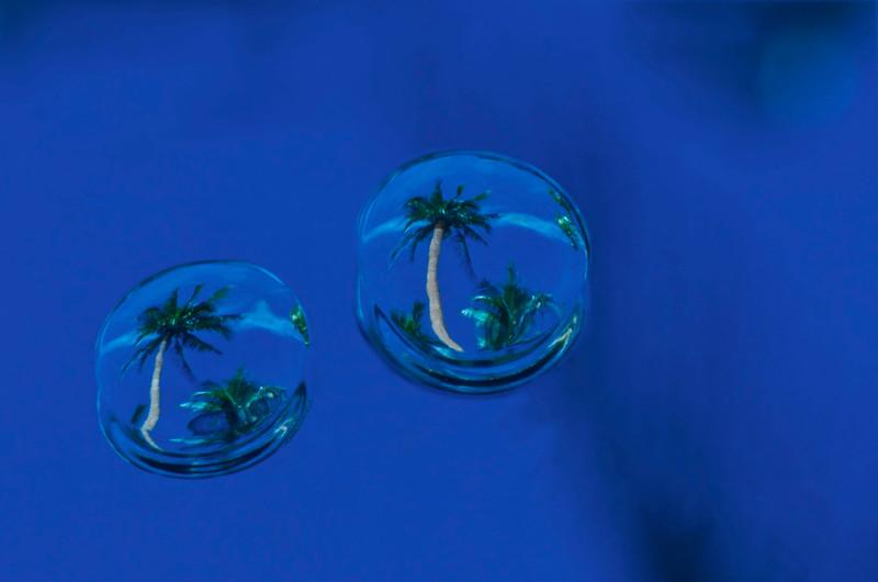 Palm Trees in Rain Drops