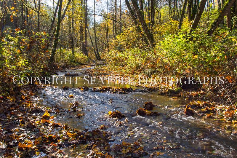 Swan Creek Park 1