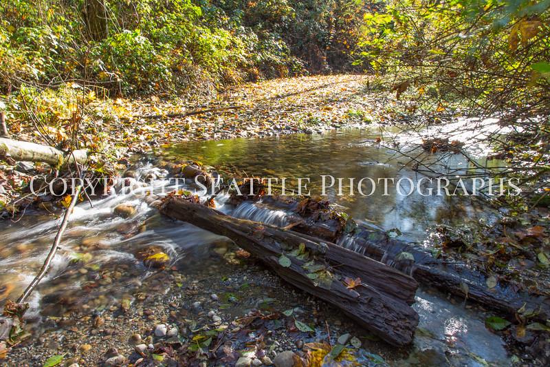 Swan Creek Park 3