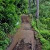 49 Moorea road 4 we got through the mud