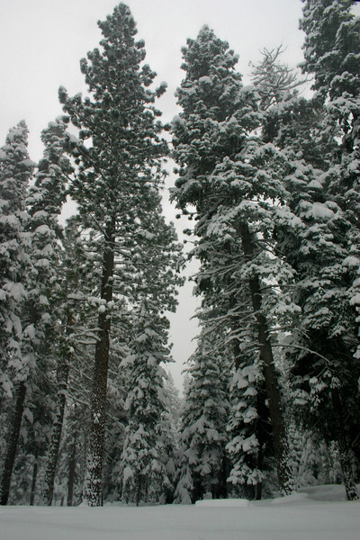 12/7/2009 Snowy Morning