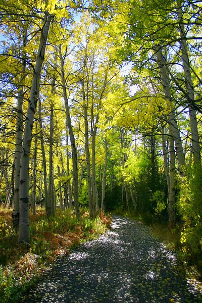 10/17/2009 Marlette Flume Trail