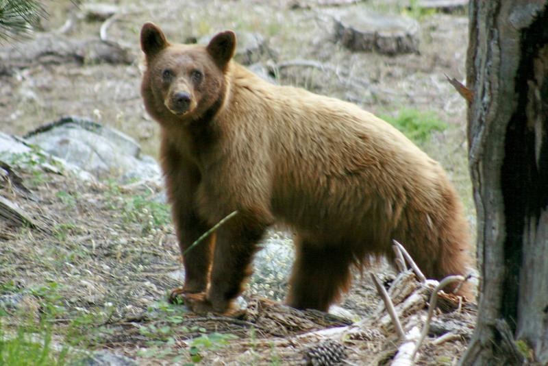 7/7/2009 Tahoma, Mother Bear