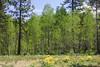 5/22/2009 New Leaves