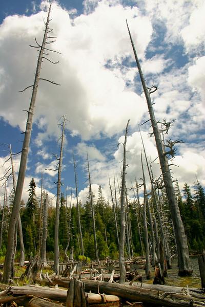 6/10/2009 Miller Lake, Dead Trees