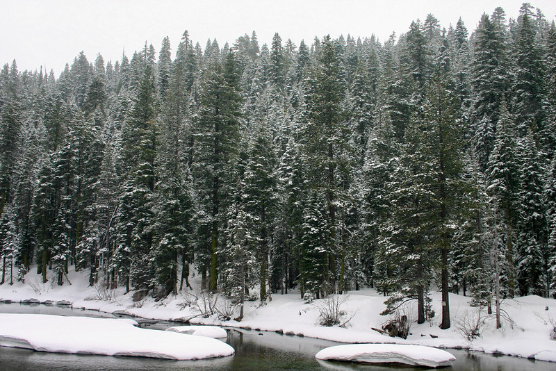 4/12/2010 Snowy Tree Line