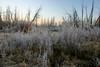 11/07/2008 Frosty Meadow, near Kiva Beach