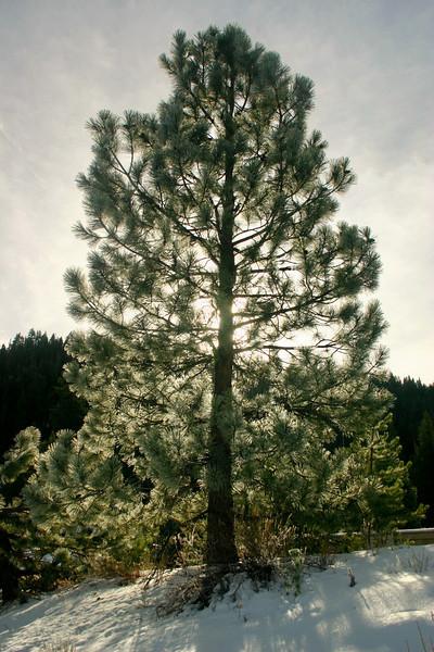 11/26/2009 Tree Light