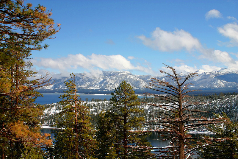 Emerald Bay, Winter Tree Line