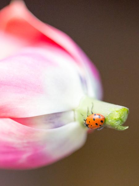 ladybug by eleanor preger
