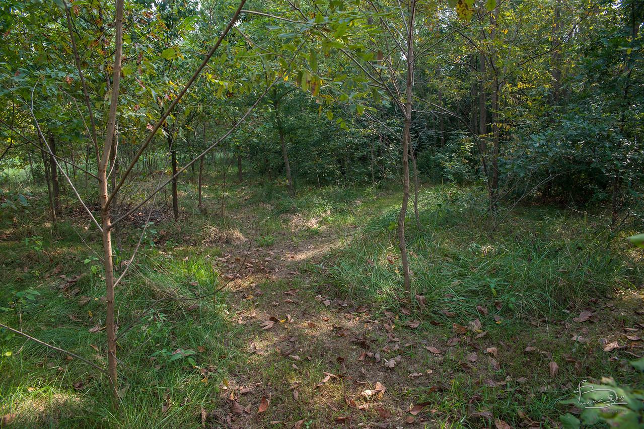 East woods path maze