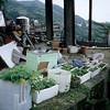 Shuchi Road 16 - Jioufen