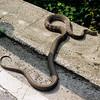 Snake0003-3