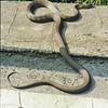 Snake0002-2