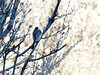 The little finches often give us the cold shoulder.