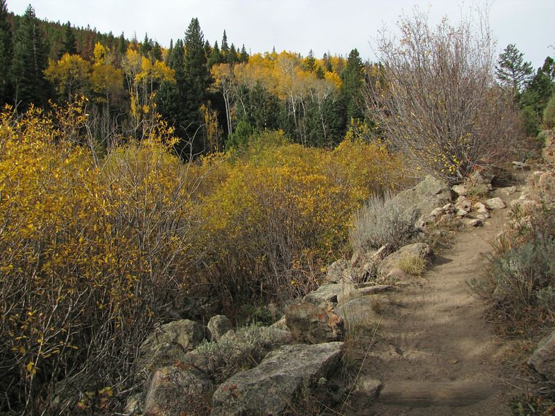 More beautiful fall colors. We love aspens so much we planted 4 of them in our front yard upon moving to Colorado.