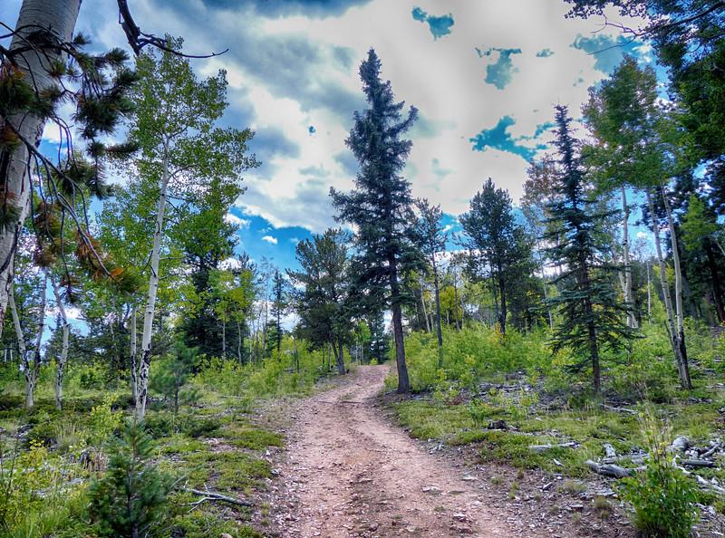 Lion's Back Trail to Elk Falls Overlook