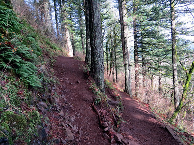 Cape Horn Trail - Washington - Nov 29, 2016