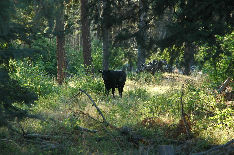 Bird Creek Meadows - Mt. Adams - September 15, 2007