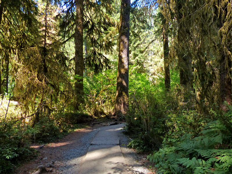 Hall of Mosses - Hoh Rainforest - August 24, 2021