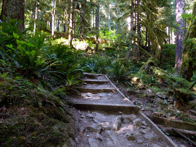 Hoh River Trail to Mineral Falls - August 24, 2021