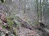 Pilot's Trail - Tiger Mountain - Dec 17, 2006