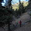 This trail is a relentless climb.  Several sections ease up a little but not for long.