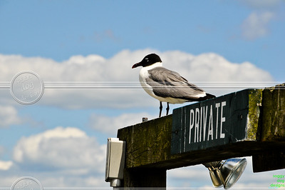 Um.... excuse me, lady!  The sign says 'Private!'