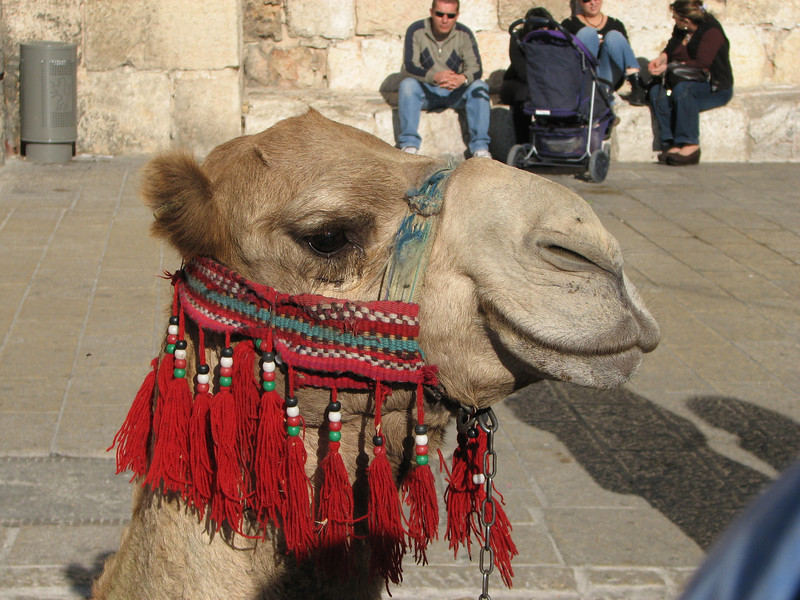 2007 12 29 Sat - Old City walk - tourist camel ride outside Jaffa Gate 4