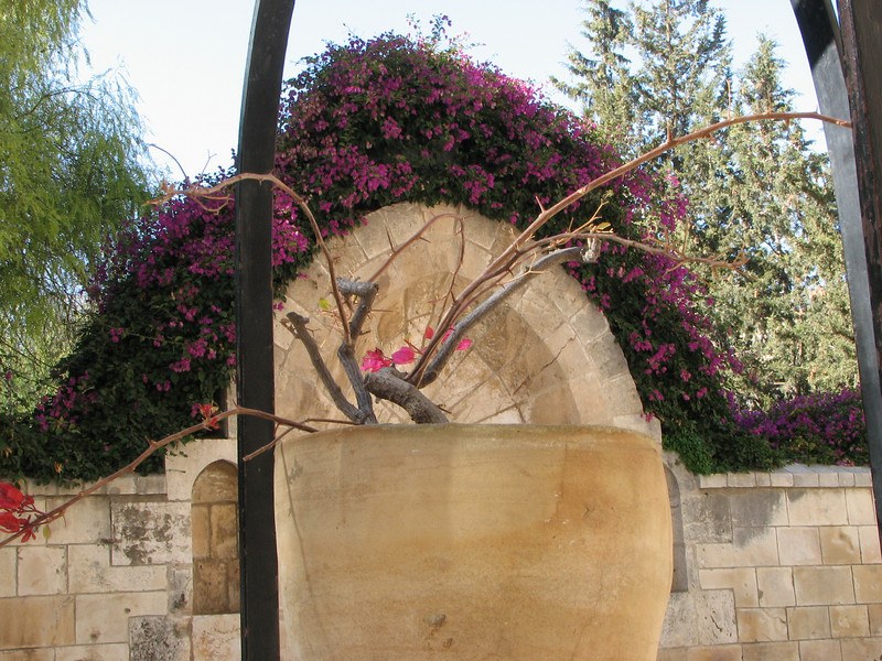 2007 12 29 Sat - Old City walk - Church of St Anne - flower pot 1