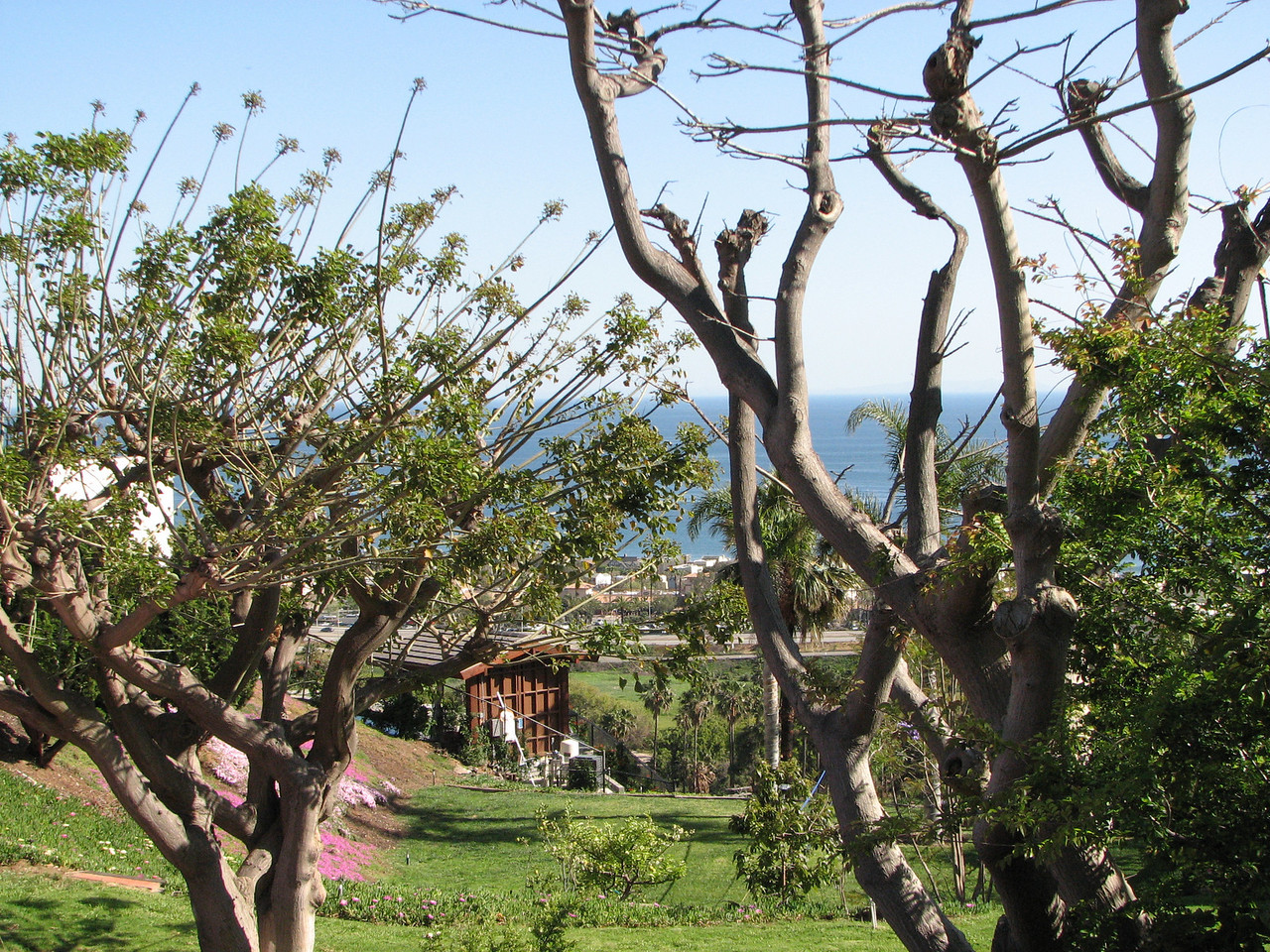 2008 04 12 Sat - View of Pacific Ocean through Malibu home trees