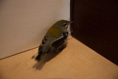 Nobody Puts Birdy in a Corner!