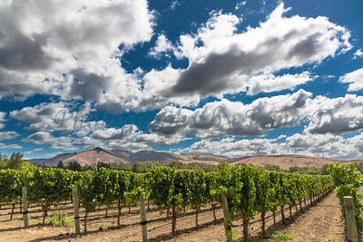 Talley Vineyards 20170921-84
