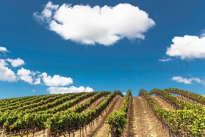 Talley Vineyards 20170921-87