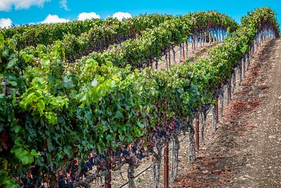 Talley Vineyards 20170921-98