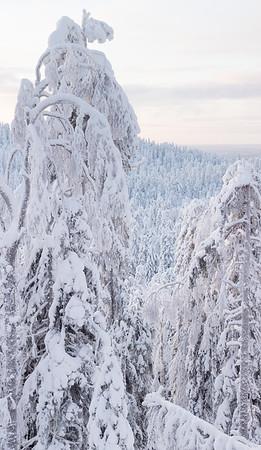 Alkuperäinen kuva on yli 11 000 px korkea panoraama.