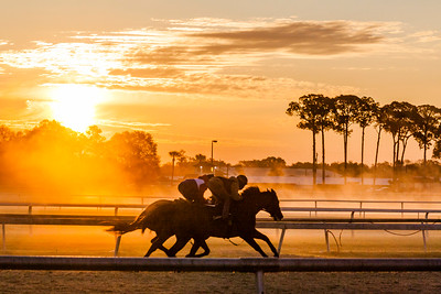 March 1, 2020  Tampa Bay Downs