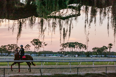 March 3, 2020  Tampa Bay Downs