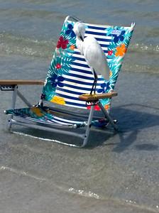 4_9_19 Egret sunning at Redington Shores