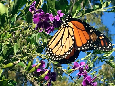 8_31_19 Blue Skies And The Butterfly