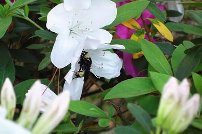 8_22_19 Pollinator