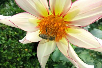 1_27_19 The Pollinator
