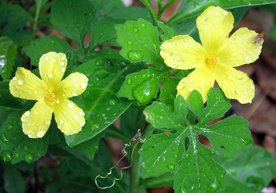 7_2_19 After the Rain