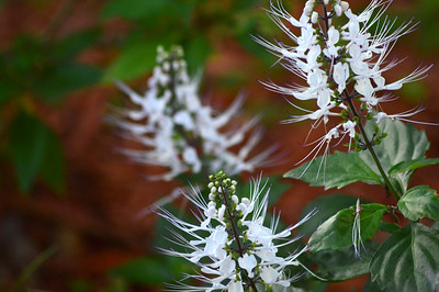 3_17_19 Cat's Whiskers in the morning