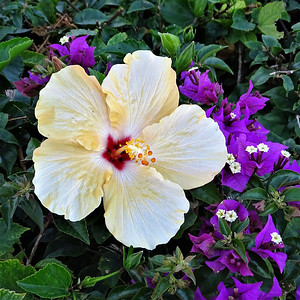 Gulfport Flowers