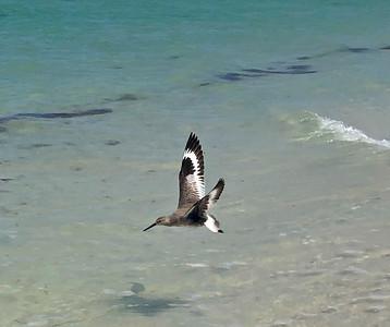 Bird at Honeymoon Island