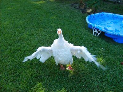 Molly the Goose