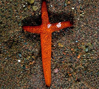4_19_20 Sea Star found on Good Friday