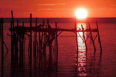 2_27_20 Cormorant Birds at Sunset